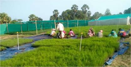 One of our Private CPCs: Appalaraju Nursery, Yadalavarivura, East Godavari District